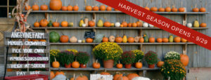 Pick Your Own Pumpkin - Harvest Barn Open