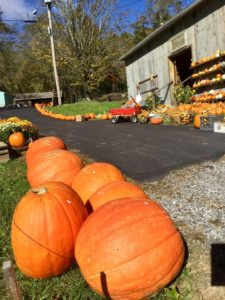 Harvest Barn - Pumpkin Patches Open